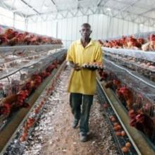 Une ferme agro-pastorale au Gabon (photo d'illustration par DR)