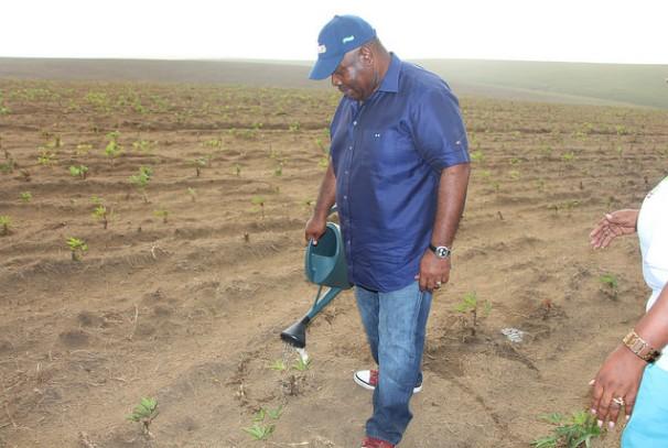 Ali Bongo Ondimba plante GRAINE dans le Haut-Ogooué