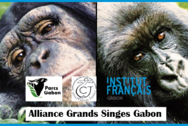 Une semaine au cœur de la forêt gabonaise