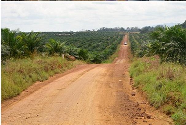 Les plantations d'Olam à Mandji