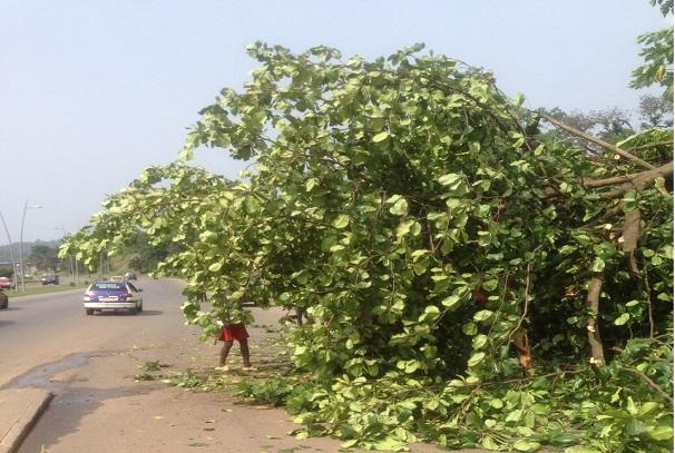 Un arbre tombé sur la route à Libreville