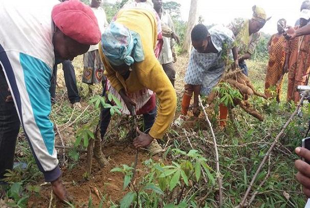 Les produits du projet GRAINE recoltés à Oyem