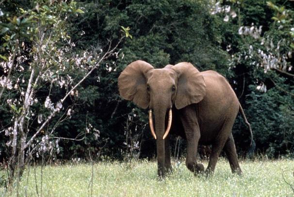 Un fonds pour le conflit homme-faune