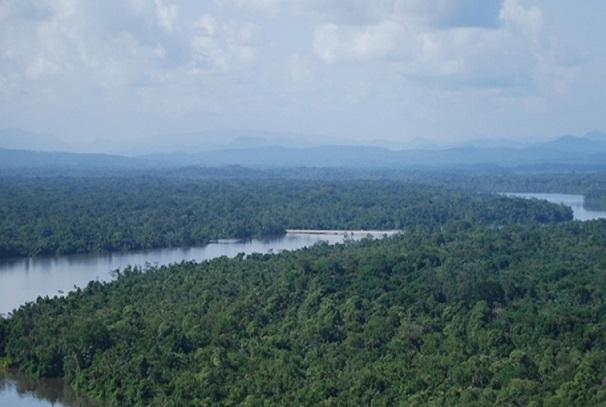 La forêt gabonaise