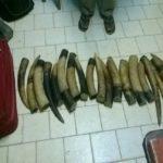 26 kilos d'ivoire saisis à Ovan