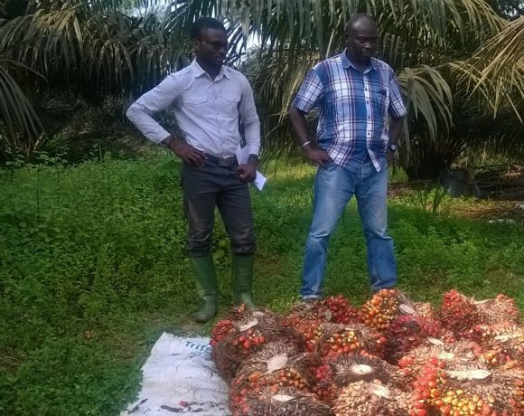 A la plantation Olam Awala
