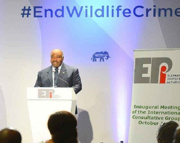 Ali Bongo Ondimba plaide pour la protection des éléphants
