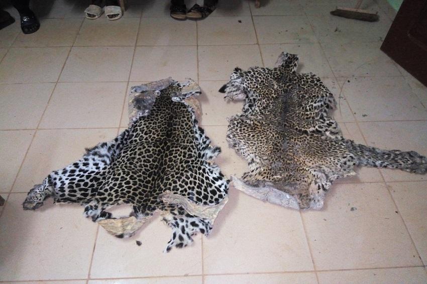 Deux peaux de panthère