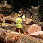 le bois gabonais