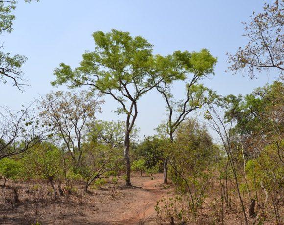 La forêt classée de Kua