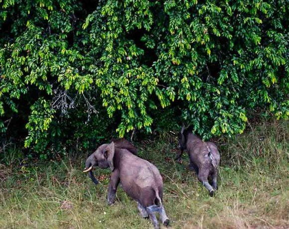 Le tourisme dans les parcs du Gabon